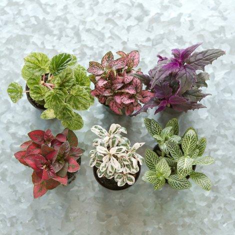 terrarium plants from Terrain